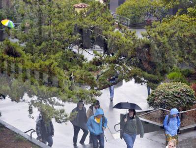 Humboldt State University Rainy Day on the Quad - Rose Court ... on