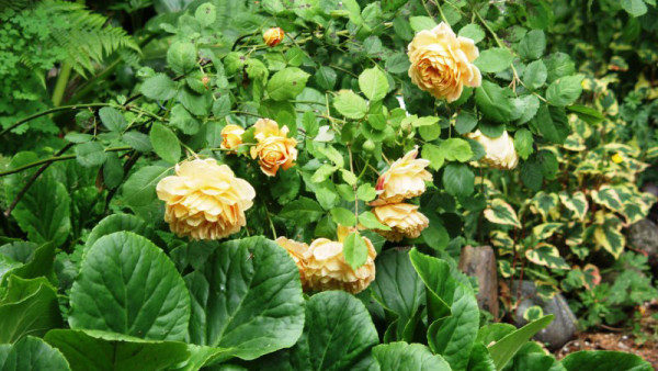 RCC Garden Tour DPI 72 29 jpg.
